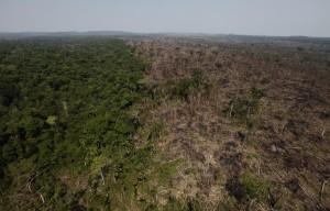 毎年何百万ヘクタールもの原生熱帯雨林が破壊される。違法な焼却の跡が見て取れる (AP Images)