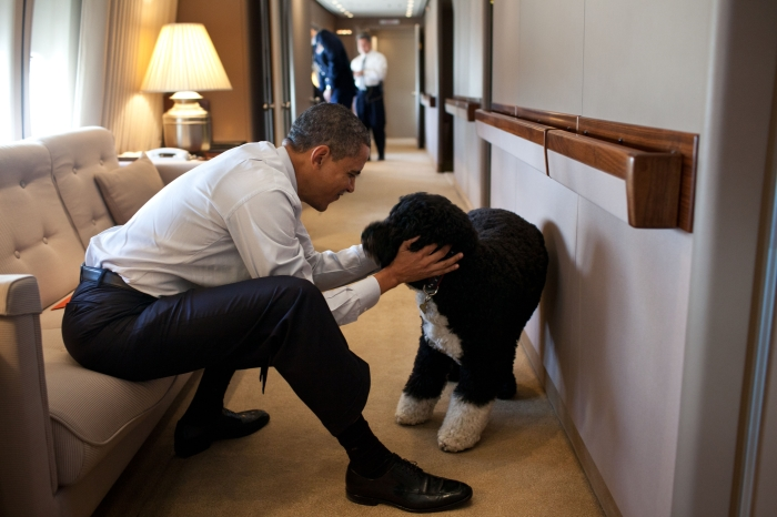 President Obama plays with his dog Bo aboard Air Force One. (White House)