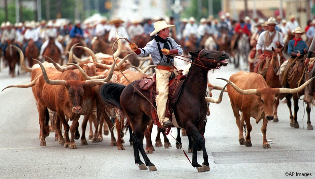 Tom Scott, a top hand, helps herd fifteen Texas Longhorns steers down North Main Street in Fort Worth, Texas, towards the city's Stockyards, Saturday, June 12, 1999. Some 200 handlers and other people on horseback turned out for the historic Longhorn drive, as part of cowtown's 150th anniversary, which has been going on all week. The steer in Saturday's processional are set to become a permanent tourist attraction in the Stockyards. (AP Photo/Ronald Martinez)
