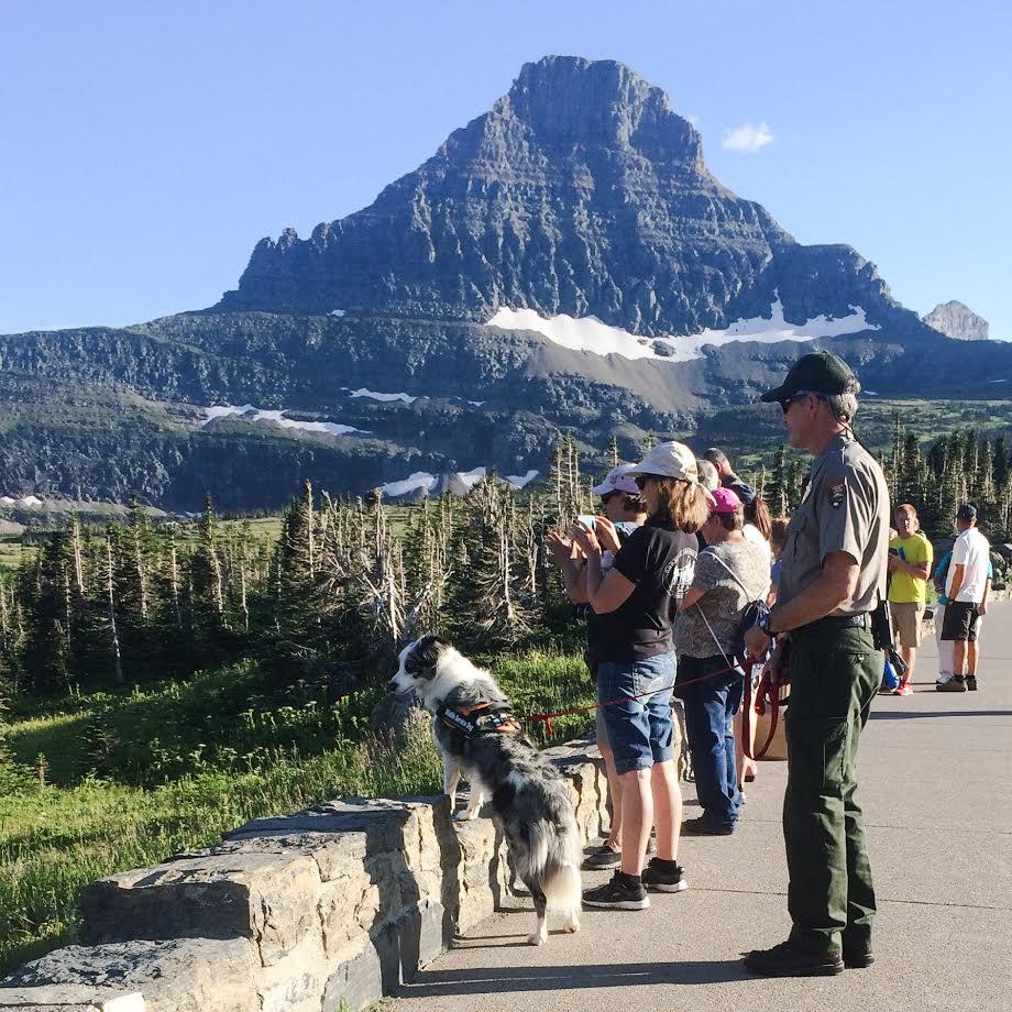 パークレンジャーが観光客と交流する機会をつくる人気者のグレーシー (NPS/A.W. Biel)
