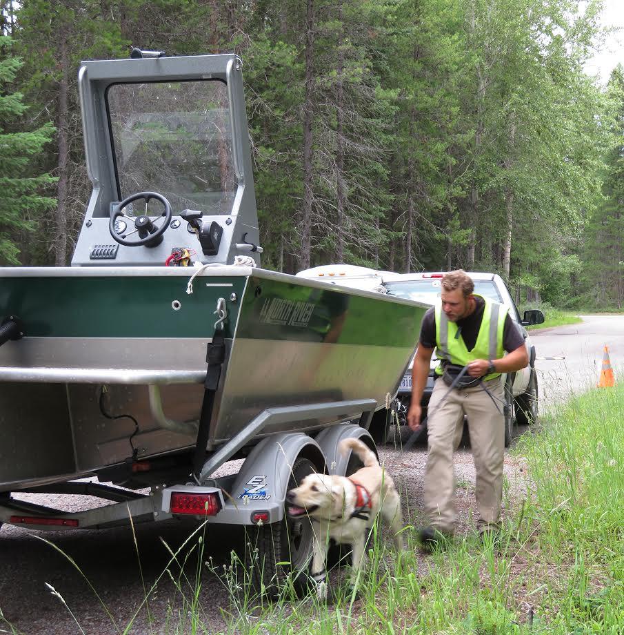 外来種がいないかボートを検査するゴールデンレトリバーのトビアス (NPS/A.W. Biel)