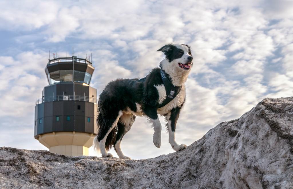 ミシガン州トラバースシティーのチェリー・キャピタル空港でパトロールするパイパー (airportk9.org)