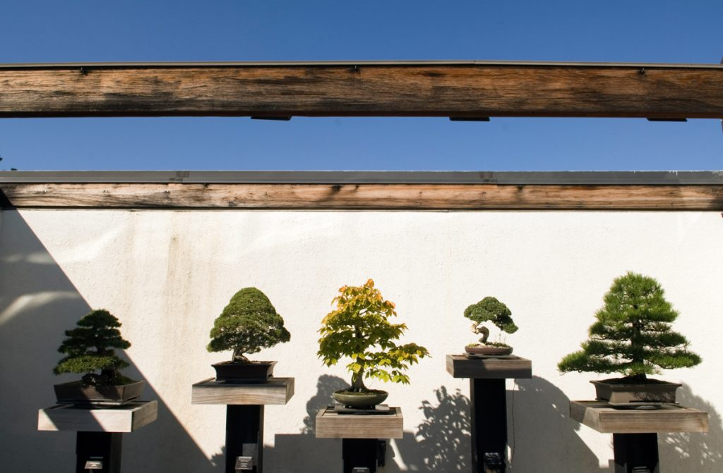 A row of bonsai trees awaits visitors at the National Bonsai and Penjing Museum, located within the U.S. National Arboretum in Washington. (© Pete Souza/Chicago Tribune/MCT Via Getty)
