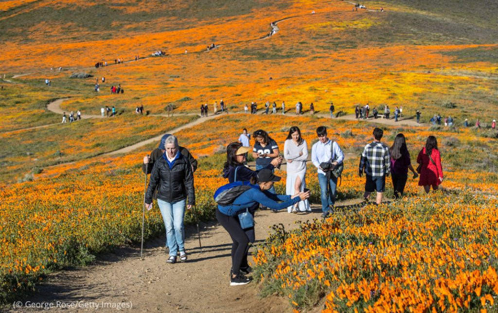 The Antelope Valley Poppy Reserve, one hour north of Los Angeles, draws many visitors. (© George Rose/Getty Images)