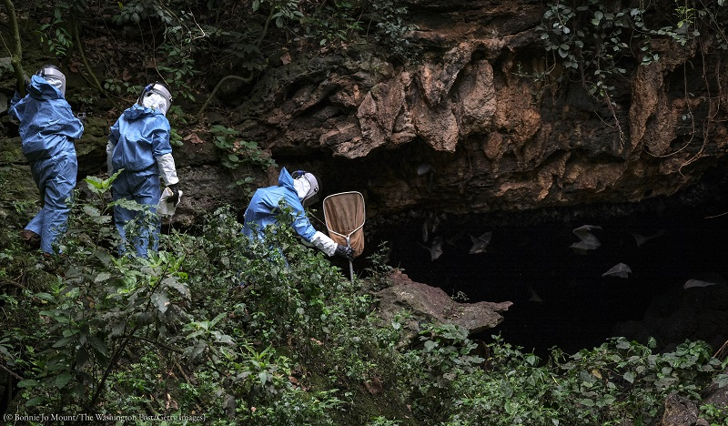 CDC scientists gather bats in Maramagambo Forest in Uganda to learn how they transmit Marburg virus to humans. (© Bonnie Jo Mount/The Washington Post/ Getty Images)