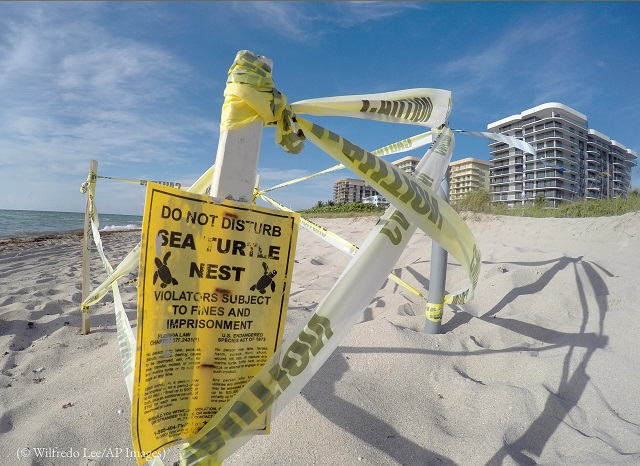 フロリダ州サーフサイドの海岸。ウミガメの巣があることを知らせるため標識が立っている (© Wilfredo Lee/AP Images)