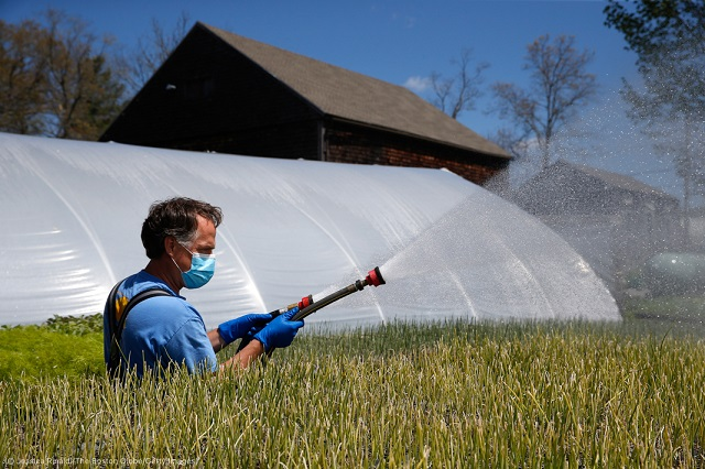 Siena Farms owner Chris Kurth waters crops. (© Jessica Rinaldi/The Boston Globe/Getty Images)