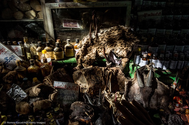 The skin of a rare wild cat is displayed with other wild animal parts at a traditional medicine shop in Myanmar. (© Romeo Gacad/AFP/Getty Images)