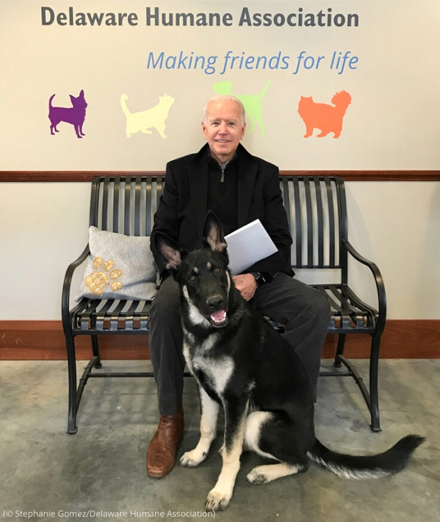 Biden with his adopted rescue dog, Major, at the Delaware Humane Association in November 2018. (© Stephanie Gomez/Delaware Humane Association)