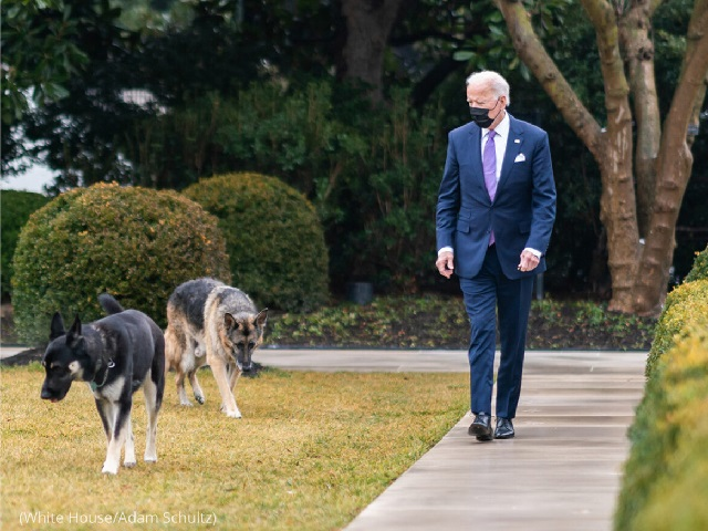 President Biden walks with his German shepherd dogs, Major and Champ, at the White House on January 26. (White House/Adam Schultz)