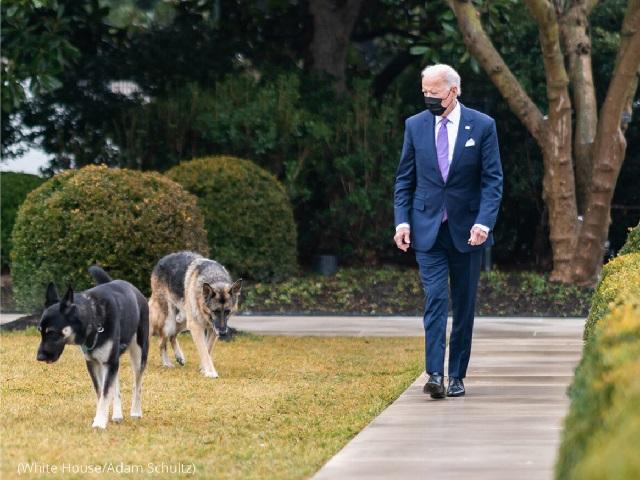 1月26日、ホワイトハウス敷地内をチャンプとメイジャーを連れて散歩するバイデン大統領 (White House/Adam Schultz)