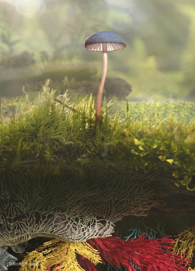 マッシュルームの地下根系の菌糸体から人工レザーを製造するボルトスレッズとマイコワークス (© Bolt Threads)